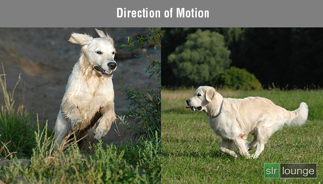 Direction-of-Motion