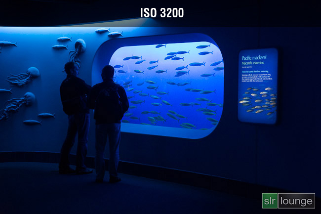 Monterey Bay Aquarium on Sony A99 by Joe Gunawan | fotosiamo for SLR Lounge
