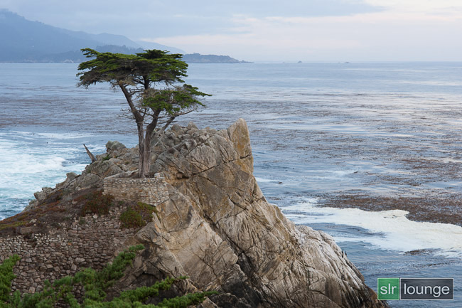 Lone Cypress by Joe Gunawan | fotosiamo.com for SLR Lounge.com