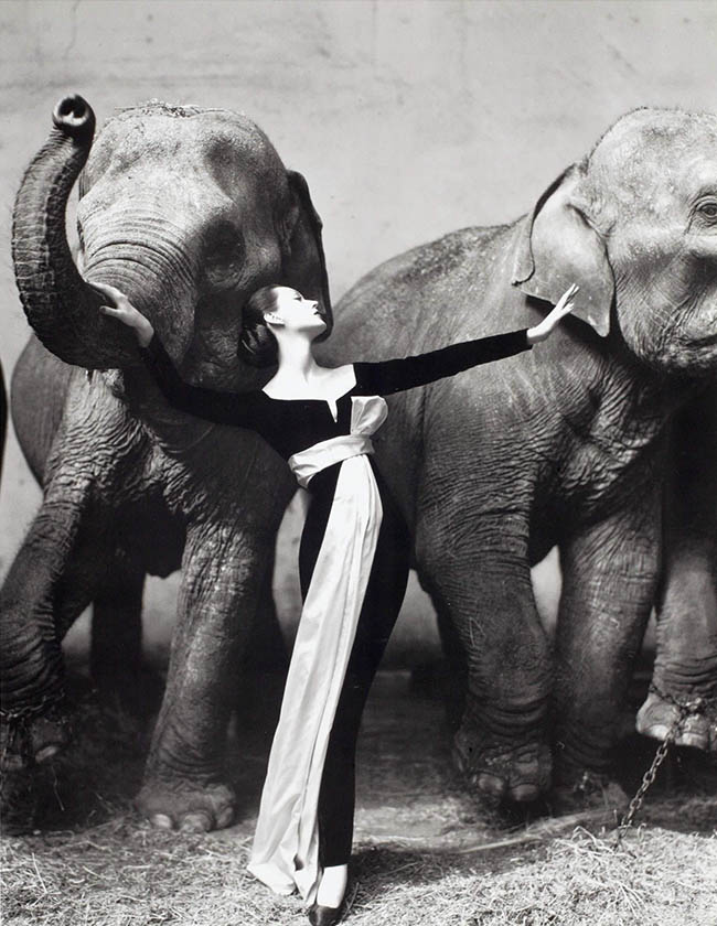 Richard Avedon's Dovima and Elephants
