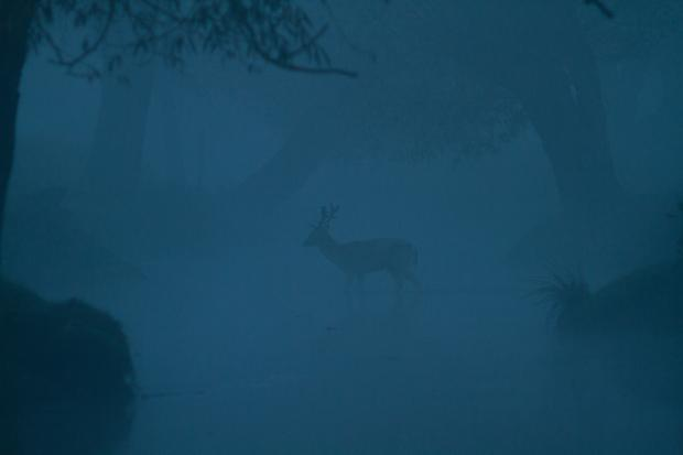 06 Deer in Stream by MBridge87