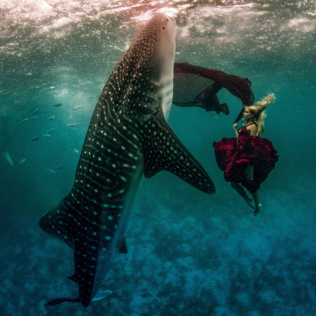 Whale Shark Fashion Shoot 3