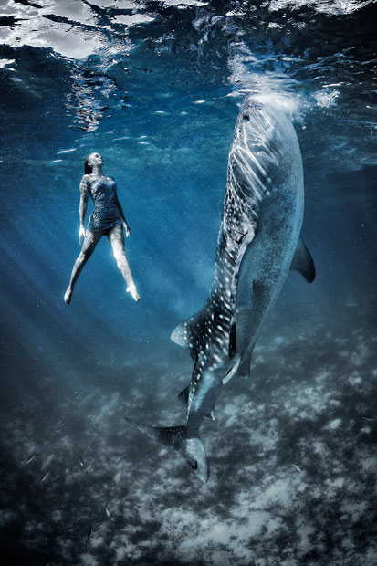 Whale Shark Fashion Shoot 1