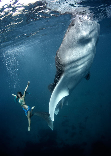 Whale Shark Fashion Shoot 4