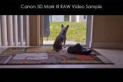 Canon-5D-Mark-III-RAW